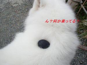 Kurotama_2